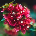 Buchete de flori speciale pentru evenimente de neuitat din viata ta